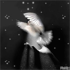 See the PicMix Paz belonging to labamba on PicMix. Dove Pictures, Jesus Pictures, Peace Bird, Christian Artwork, Good Night Greetings, Forearm Tattoo Design, Animation, Gif Animé, White Doves