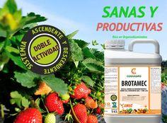 #Fresas más Sanas y Productivas, Naturalmente con Brotamec®
