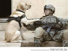 If you need a cathartic cry, go to youtube and search for videos of soliders coming home to their dogs.... it's really beautiful