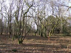 Gnarled trees in Havant Thicket by Jonathan Billinger, via Geograph
