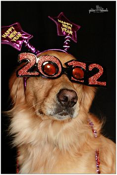 lets here it for this dog!!!!! It even knows witch year is the best!!