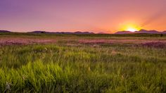 Purple mountains and amber waves of grain near Roxborough State Park in southwest Denver Colorado.[OC][3264x1836]