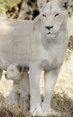 ●•●•●•●•●•● Animals ●•●•●•●•●•● Animals Images, Zoo Animals, Wild Animals, Animals And Pets, Beautiful Cats, Beautiful Horses, Animals Beautiful, Rainforest Animals, African Animals