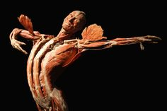 A plastinated human corpse posed to look like a dancer stands on display at the Body Worlds exhibition on April 26, 2011 in Berlin, Germany. The exhibition, which features human and animal corpses plastinated by Gunther von Hagens, focuses on the role of the heart. It will be open to the public at the Postbahnhof from April 27 to August 14.