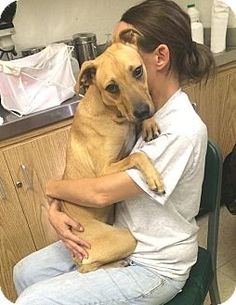 SAFE! No longer listed- Cleveland, OH - Pit Bull Terrier Mix. Meet Gum Drop-URGENT!!!, a dog for adoption. Gum Drop-URGENT!!!'s Story... Adopt me! Email clevelandacvolunteer@gmail.com for info! K-72 Gum Drop 1 yr old, female, 30 lbs, HW (-). Intake: 9/11/14 #75134... Act quickly to adopt Gum Drop-URGENT!!!. Pets at this shelter may be held for only a short time. http://www.adoptapet.com/pet/11604523-cleveland-ohio-pit-bull-terrier-mix