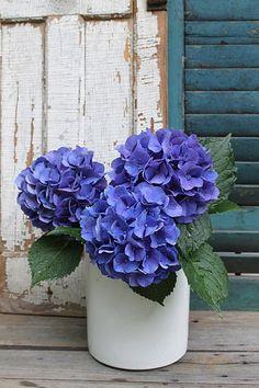 blue hydrangea vignette ..