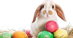 How much do you know about Easter, bunnies, eggs and more?  Test your knowledge of Easter traditions with some fun facts and Easter trivia.