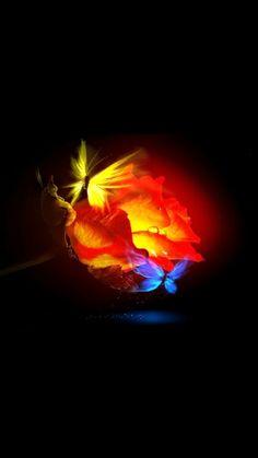 Butterfly moon glow