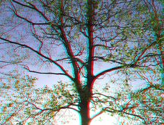 IMAGINATION - a Tree (3D - anaglyph) View Photos, Red And Blue, Imagination, 3d, Photography, Photograph, Fantasy, Fotografie, Photoshoot