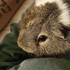 Lap time w/ Sammy. St P, Photo And Video, Instagram, World Animals