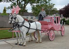 Pink Horsedrawn Carriage for Pink Weddings by Asian Wedding Horses Pink Love, Pretty In Pink, Pink Purple, Pink White, Pink Color, Magenta, Hot Pink, Wedding Carriage, Horse Wedding