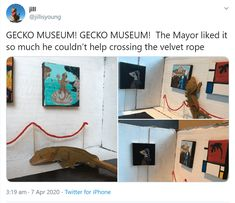 Artist Creates Printable Art Museum Kit For Geckos - World's largest collection of cat memes and other animals Funny Animal Memes, Cute Funny Animals, Funny Animal Pictures, Cat Memes, Funny Memes, Hilarious, Jokes, The Velvet Rope, Popular Artists
