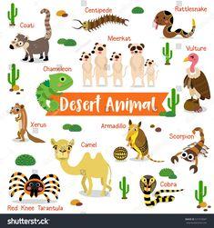 Desert Creature Cartoon On White Background Stock Vector (Royalty Free) 521373007 Desert Ecosystem, Desert Biome, Felt Animals, Animals For Kids, Animals And Pets, Dinosaur Videos, Desert Animals, Animal Habitats, Soul Art