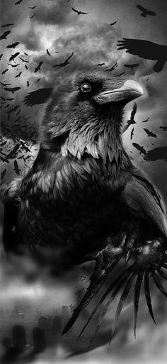 Ravens and crows black and white art crow Art raben black crows Robert diy tattoo images tatt The Crow, The Raven, Raven Art, Diy Tattoo, Crow Art, Bird Art, Black Tattoos, Cool Tattoos, Crow Totem