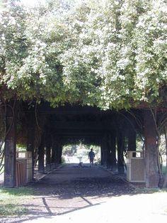California Gardens / San Jose Municipal Rose Garden