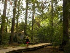 Big things come in small packages. Tucked in an upscale neighborhood in Los Altos, Redwood Grove Nature Preserve is just 6 acres, but it sure packs in those redwoods! This little sanctuary is a locals' favorite, with several spur trails, observation decks, and picnic tables. Wander the central boardwalk and hillside trail that follows bubbling Adobe Creek through a grove of reds transplanted from Santa Cruz. (All the trails eventually…