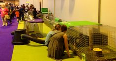 11 rescue bunnies from Fat Fluffs enjoying their time in the Runaround set up at the national pet show 2014 Enough Is Enough, Bunnies, Fat, Rabbits, Baby Bunnies, Bunny, Rabbit