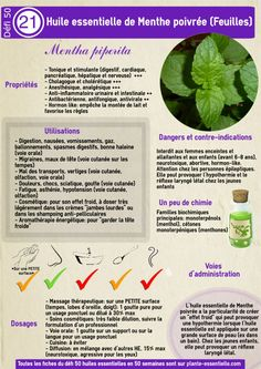 Huile essential menthe poivrée: Propriétés and recovery without danger Oregano Essential Oil, Are Essential Oils Safe, Young Living Essential Oils, Homemade Cosmetics, Naturopathy, Medicinal Herbs, Health And Wellbeing, Tea Tree, Natural Healing