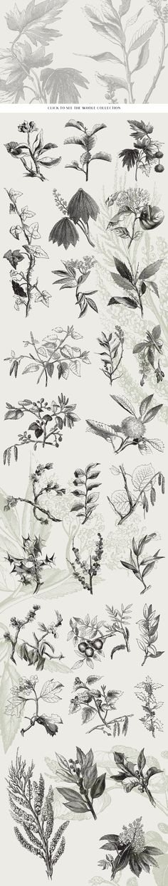29 Branches, Twigs, & Leaves by Vector Hut on @creativemarket