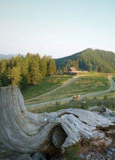 Ein weiteres Herzstück des Naturpark Almenland: die Sommeralm. #almenland #naturparkalmenland #sommeralm #natur  (c) Pollhammer Golf Courses, Mountains, Nature, Travel, Water Pond, Road Trip Destinations, Summer, Naturaleza, Voyage