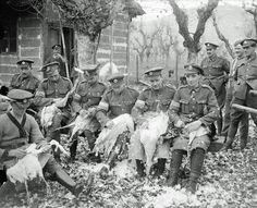 British troops plucking turkeys for Christmas Day, 1918. Q 26213