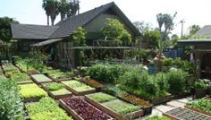 Sustainable Living? This Urban Homestead Produces 6,000lbs of Food Every Year!