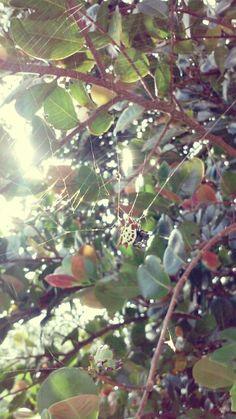 Photo Finder, Plant Leaves, Plants, Plant, Planets
