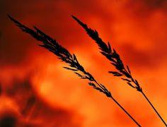 Two on Fire! - lorena masi - Google+