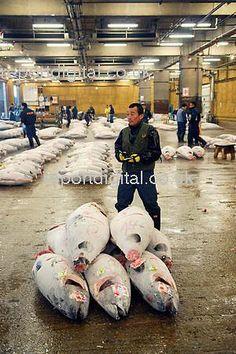 tuna, world's largest fish market at Tsukiji, Tokyo