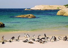 Spectacular Places: Beautiful Boulders Beach, South Africa..