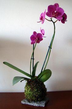 FLORERIAS EN LIMA - Kokedamas, Plantas de Interiores
