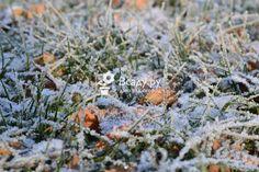 Как ухаживать за газоном в декабре, советы, рекомендации, фото