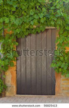 doorway vines