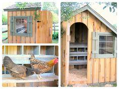 new-chicken-coop.jpg 1.024×768 pixels