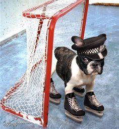 Dog Goalie