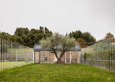 Una casa para un hombre y un árbol por TBA
