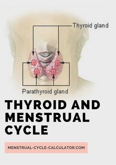 A normal functioning thyroid gland is vital for a normal menstrual cycle. Both abnormal conditions of the thyroid gland, hypothyroidism, and hyperthyroidism, can affect the menstrual cycle and make it abnormal. Menstrual Cycle Calculator, Female Reproductive System, Thyroid Gland, Hypothyroidism, Pregnancy, Conditioner, Thyroid, Pregnancy Planning Resources, Conceiving
