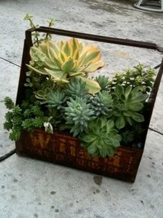 Repurpose old containers into planters. this site has some gorg succulent arrangements. Growing Succulents, Succulents In Containers, Cacti And Succulents, Container Plants, Planting Succulents, Cactus Plants, Container Gardening, Container Flowers, Vegetable Gardening