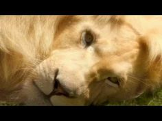 Elvis and lion Kinds Of Music, Music Love, My Music, Instrumental, Johann Strauss Orchestra, Tim Rice, Lion Images, The Enchantments, Frases