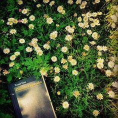 #tomrısuyar #daisy #poetry - @hsipahi- #webstagram