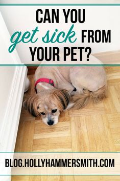 Can You Get Sick: Is it possible for your pet to pass on germs and illness to you? Learn if you can get sick from your pet and what diseases to look for in your cat or dog. Can Your Pet, Cat Scratch Disease, Cat Biting, Dog Rooms, Dog Hacks, Flea And Tick, Litter Box, Pet Health