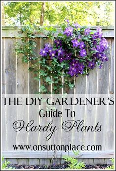A guide to hardy plants for multiple planting zones with tips and ideas for a successful perennial garden. Hardy perennial plants.