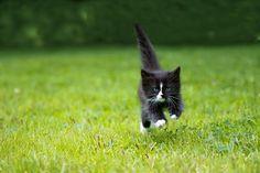 Kitten by whitesnow, via Flickr