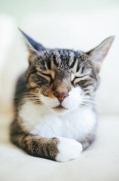 Meditating cat