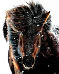 Horse in winter looks almost like a mythical bear horse creature!
