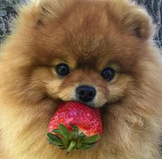 Can I please have this strawberry?