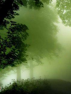 #TREE##NATURE#