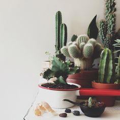 group of cactus plants in different kinds of planters
