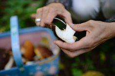 Viner till svamp Rätter med fin svampkaraktär finner sin harmoni med viner med mjukhet, vänliga tanniner och snäll syra. Här är ett antal lämpliga viner till årets rikliga svamputbud.