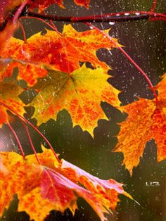 GIF Rain on autumn leaves